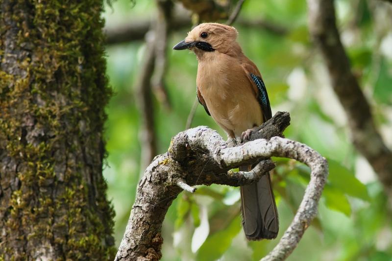 Birds Of Binsar Binsar Forest Retreat